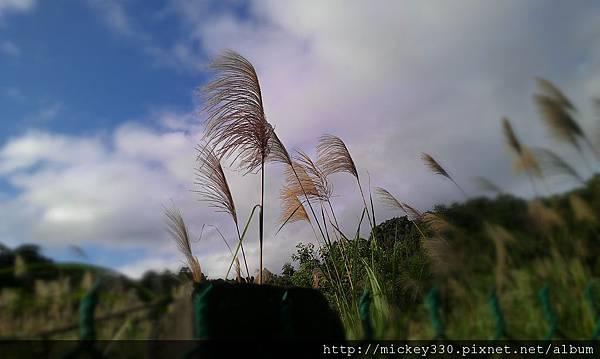 2012 2社群網站用圖~那天午後我為家附近風動的蘆葦神往不已 (12).jpg
