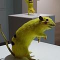 2012 310CHIM POM日本前衛團體在日本與台灣創作展~皮卡丘是真的涉谷街鼠做的唷! (20)