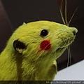 2012 310CHIM POM日本前衛團體在日本與台灣創作展~皮卡丘是真的涉谷街鼠做的唷! (21)