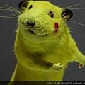 2012 310CHIM POM日本前衛團體在日本與台灣創作展~皮卡丘是真的涉谷街鼠做的唷! (23)