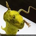2012 310CHIM POM日本前衛團體在日本與台灣創作展~皮卡丘是真的涉谷街鼠做的唷! (24)
