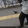 2012 725東京第一天~下午兩點從飯店出來到新宿開逛開吃~悠閒在路邊拍一堆鴿子圖 (2)
