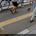 2012 725東京第一天~下午兩點從飯店出來到新宿開逛開吃~悠閒在路邊拍一堆鴿子圖 (3)