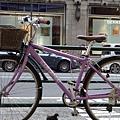 2012 725東京第一天~下午兩點從飯店出來到新宿開逛開吃~悠閒在路邊拍一堆鴿子圖 (8)