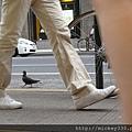 2012 725東京第一天~下午兩點從飯店出來到新宿開逛開吃~悠閒在路邊拍一堆鴿子圖 (9)