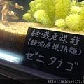2012 726東京之旅~晴空塔南青山表參道原宿 (29)