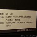 2012 818松山文創園區看奇幻魅影展 (46)