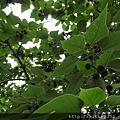 2012 5 31我在寶藏巖隨拍隨走隨看 (54)