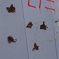 楓葉變成工地圍牆的創作品?!