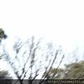2013 3 5tokyo day3  用消費型相機也能拍好圖吧 (4)