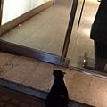 2013 3 29生日小餐會之門口有貓