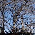 2013 3 24我在北京798閒逛亂拍 (6)