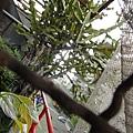 2013 7 26台中自由人藝術公寓~從老公寓空間到展覽到出租房與公共空間我都很喜歡www.facebook (27).JPG