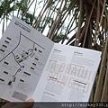 2013 新加坡 GILLMAN BARRACKS藝術特區 自然共生場面 (4)