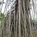 2013 新加坡 GILLMAN BARRACKS藝術特區 自然共生場面 (5)