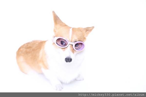 攝影棚美安堂開張後 本想幫PINKY拍 但她與主人一直很忙 結果OLI爸媽頭香 寵物與主人的寫真集 溫暖與歡樂的攝影作