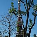 2013 11 19~20東京一日遊 (4).JPG