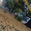 2014 11 28-29 @ 東京 (170)