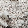 20180930 鶯歌陶瓷博物館國際陶藝雙年展   (18)
