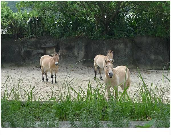 zoo-34.jpg