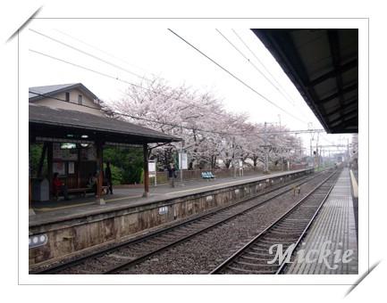 05前往嵐山-松尾大社-4.JPG