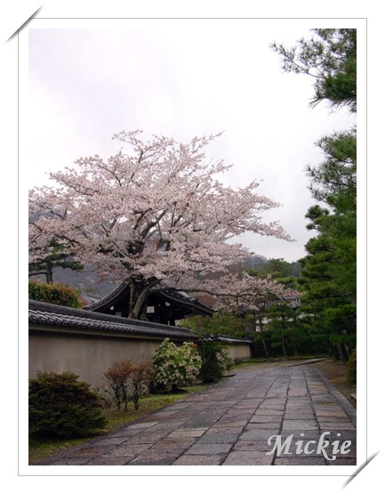 06前往嵐山-5.JPG