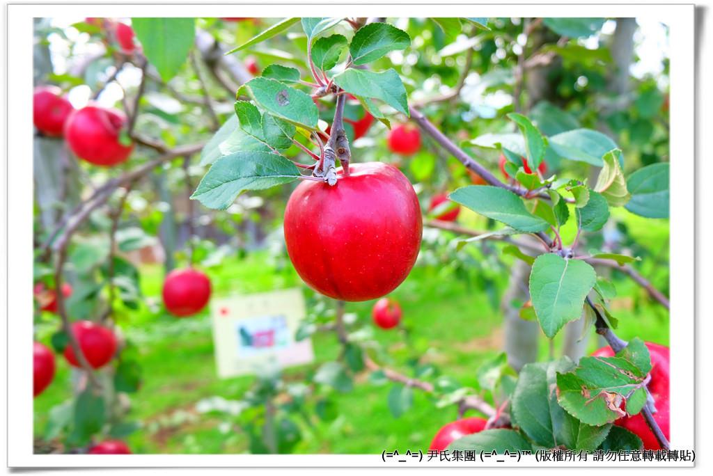 りんご-047