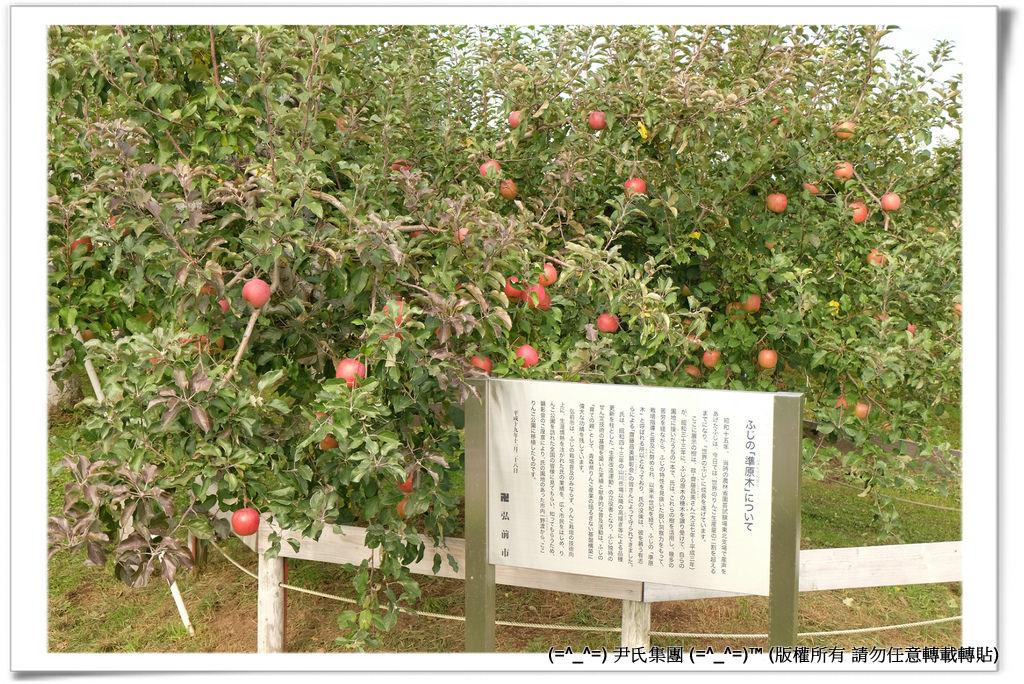 りんご-028