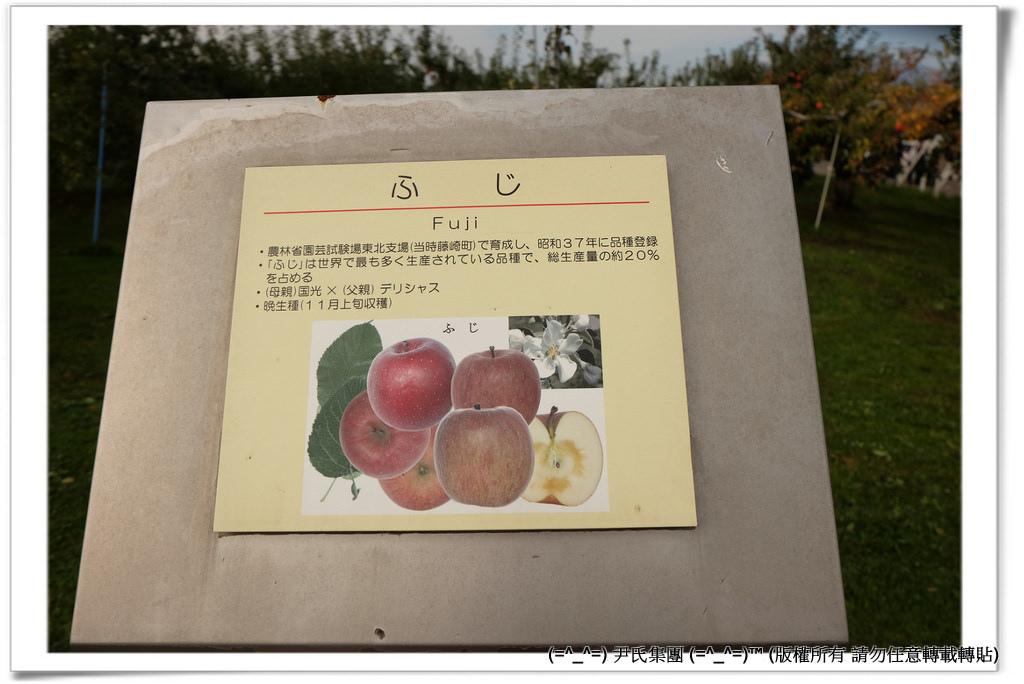 りんご-029