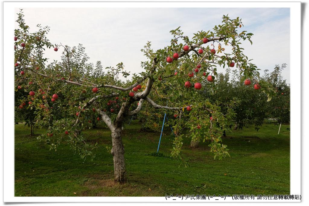 りんご-030