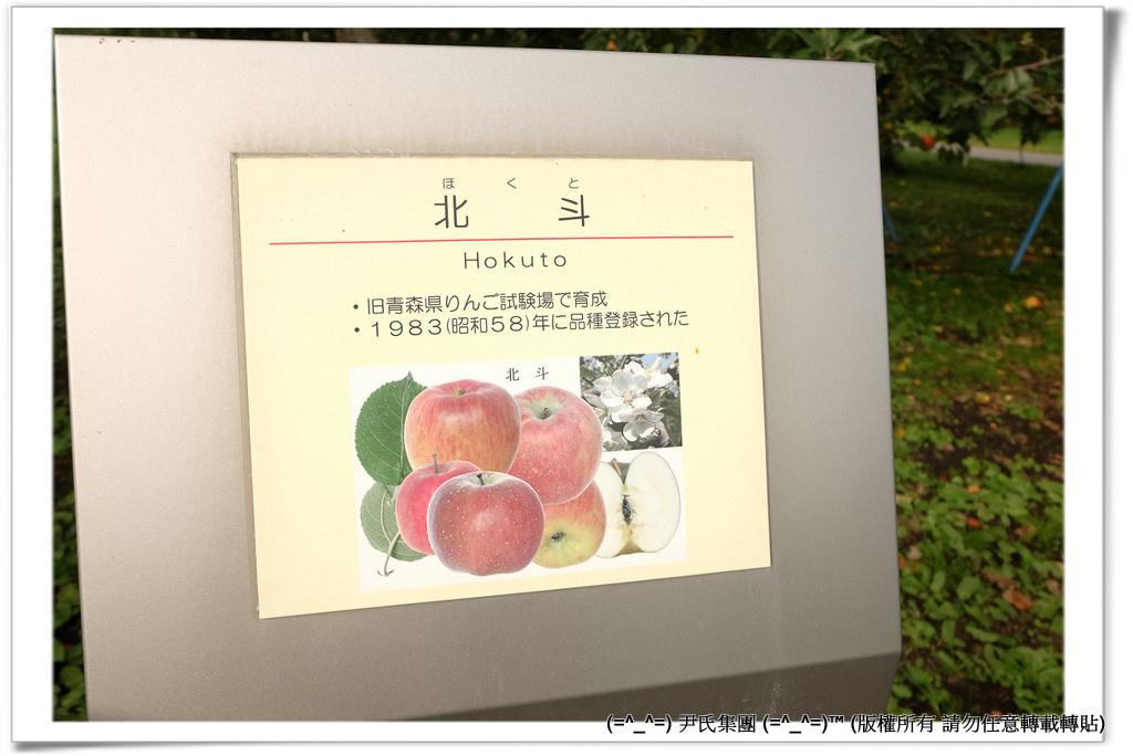 りんご-031