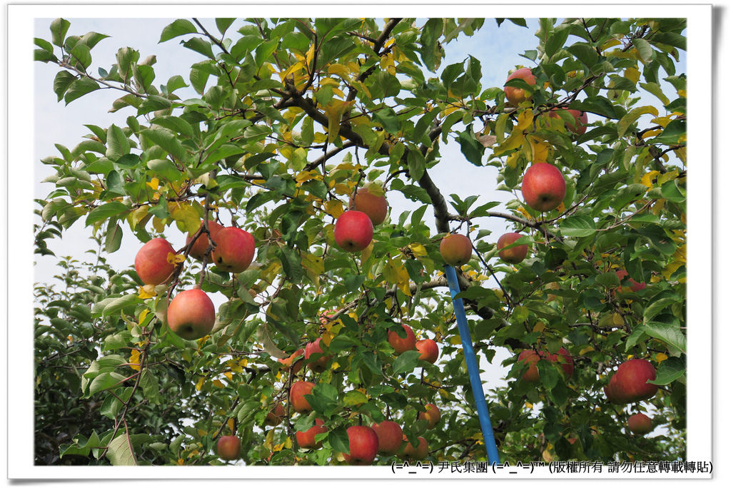 りんご-032