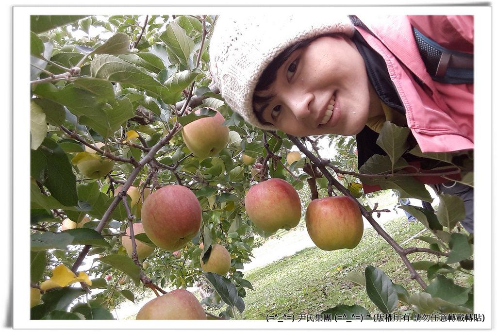 りんご-034