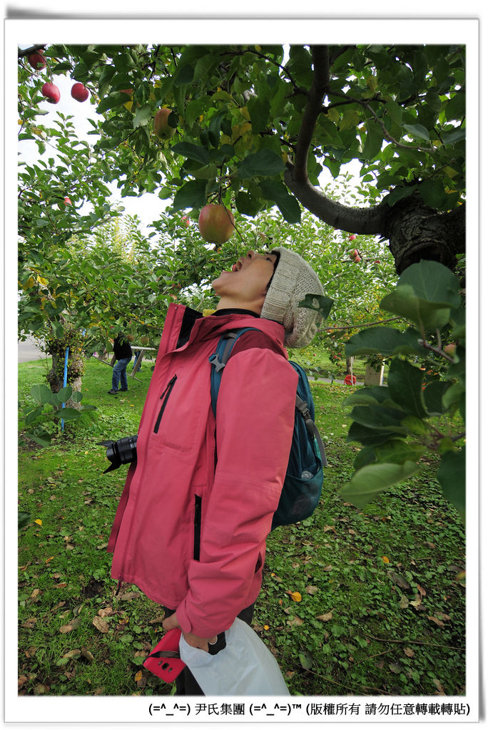 りんご-035