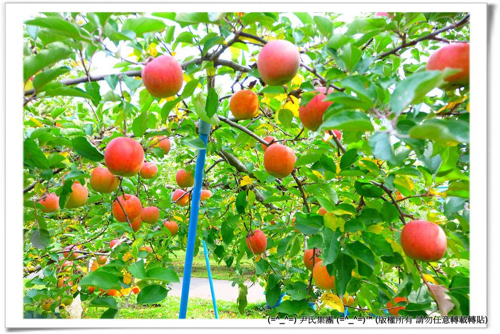 りんご-037