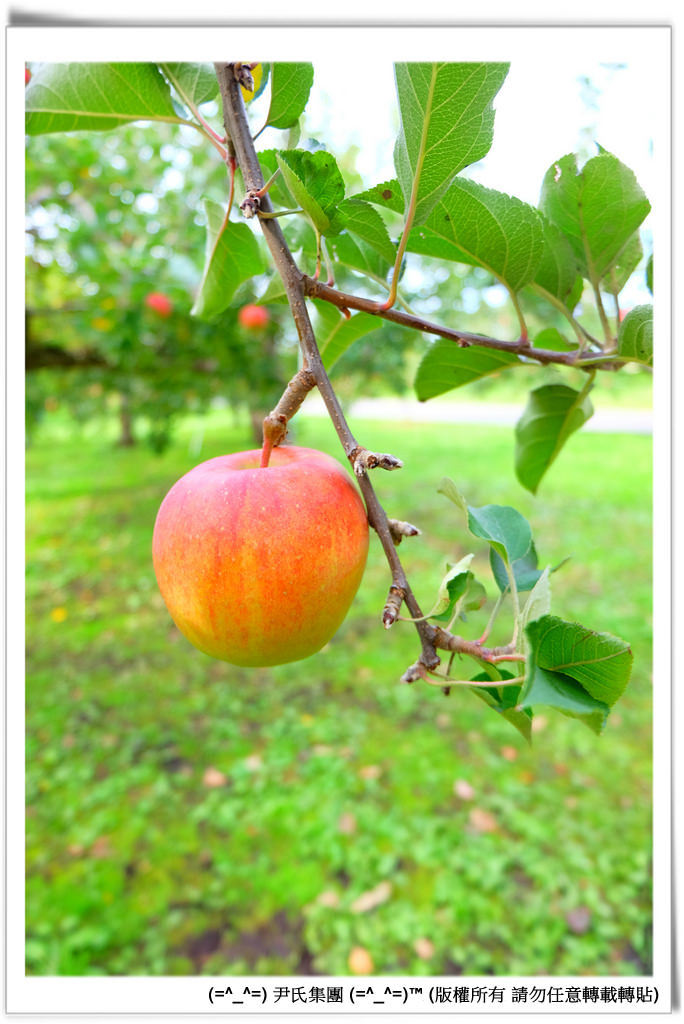 りんご-038