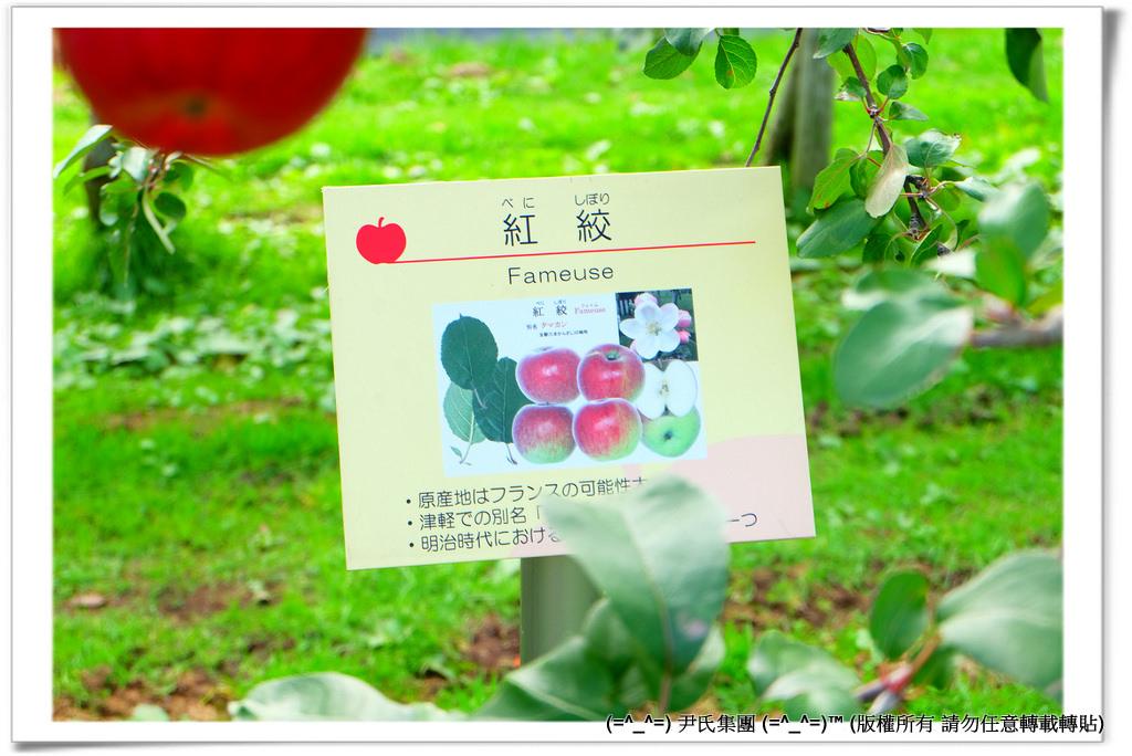 りんご-046
