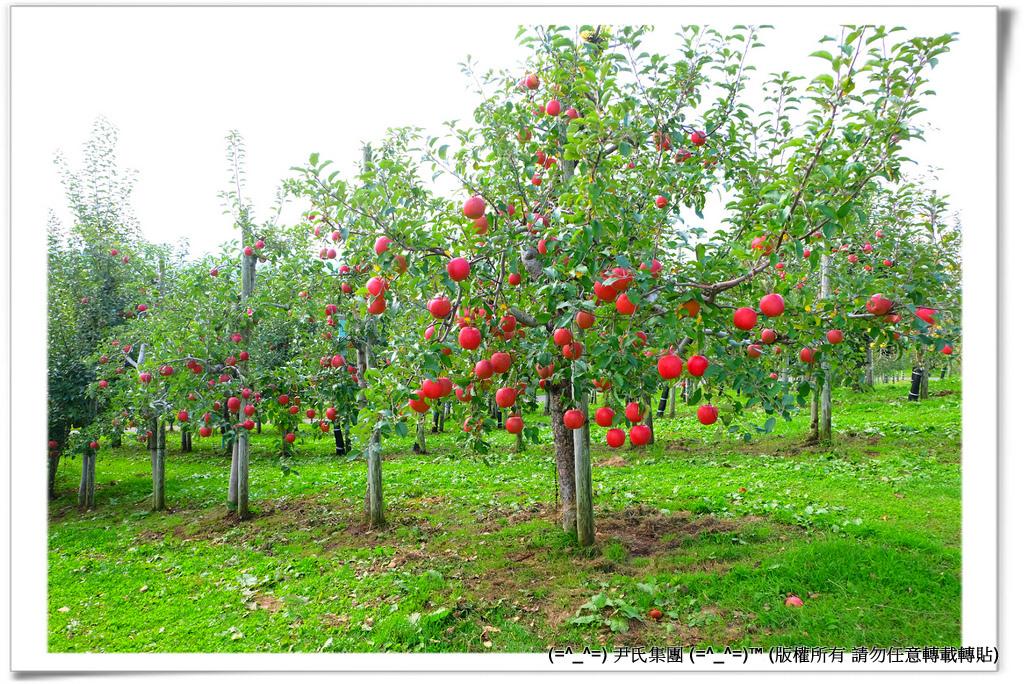 りんご-048