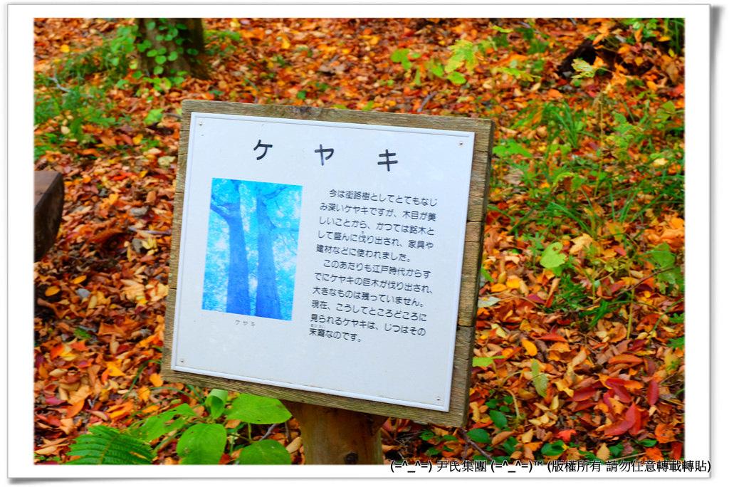 銚子大滝-023