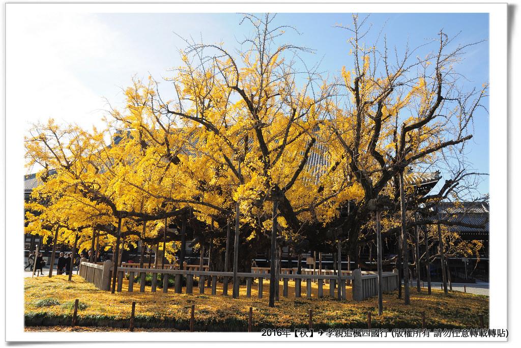 西本願寺-005