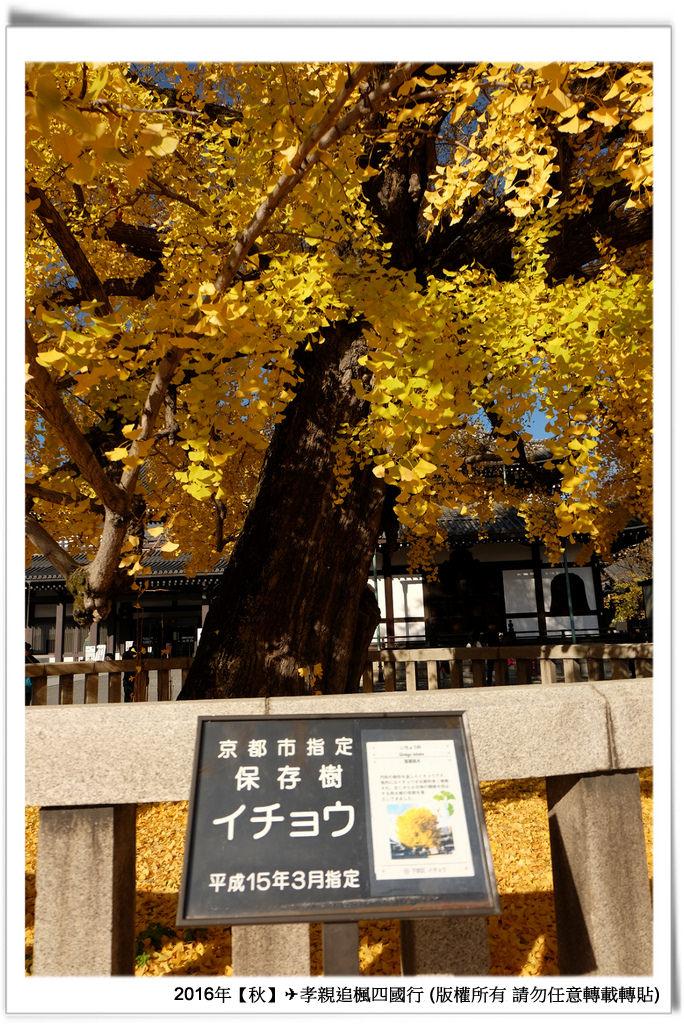 西本願寺-008