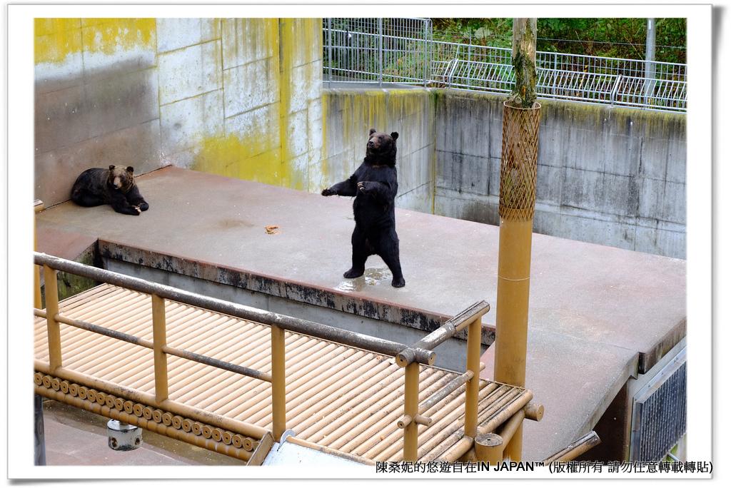 熊牧場-011