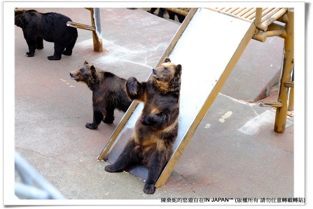 熊牧場-013