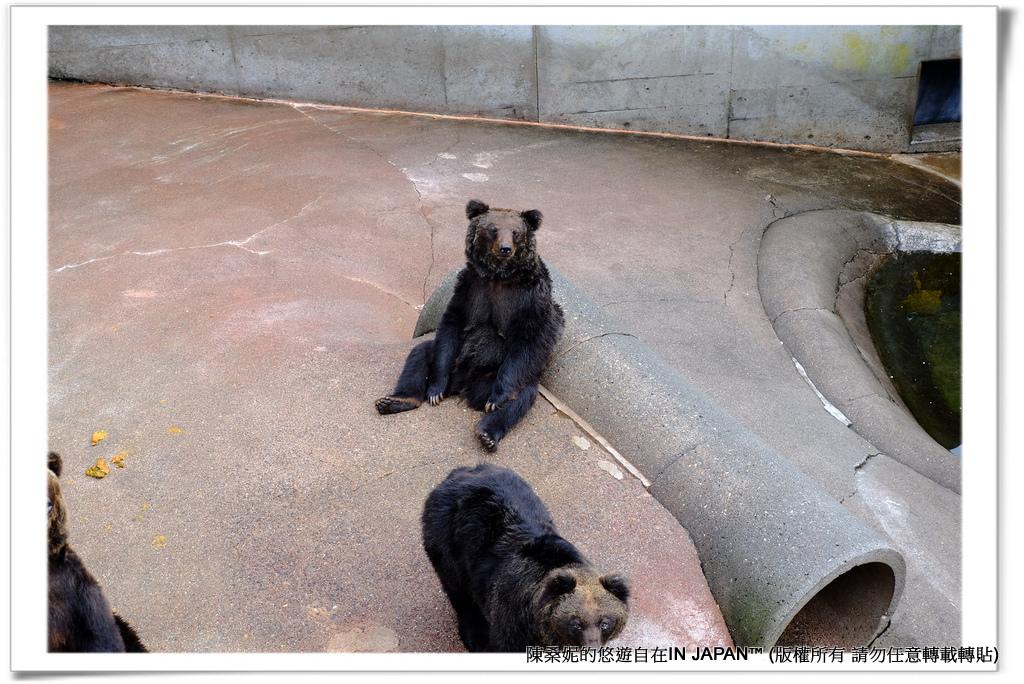 熊牧場-022
