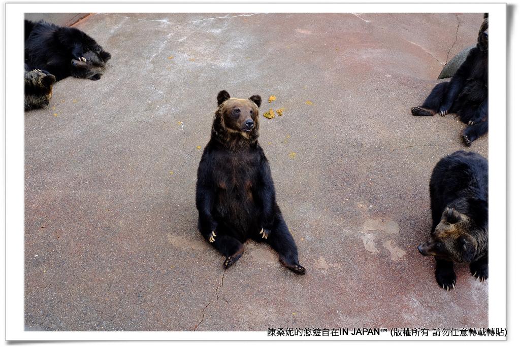 熊牧場-023