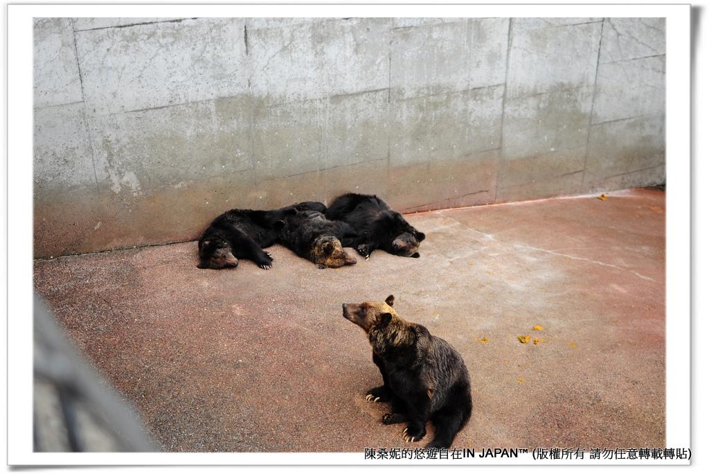 熊牧場-024
