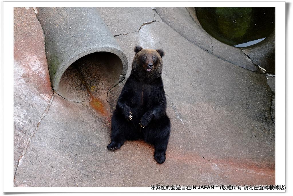 熊牧場-028