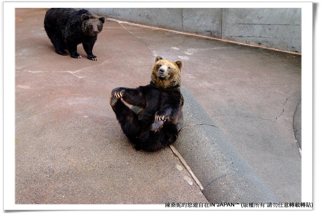 熊牧場-030