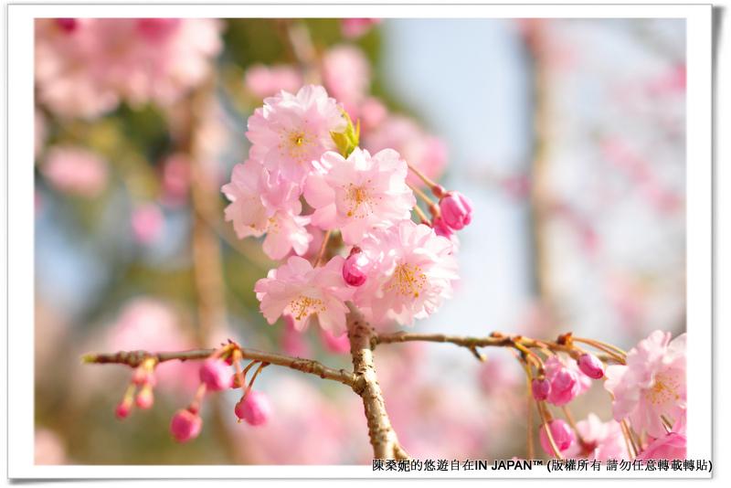 太宰府-036