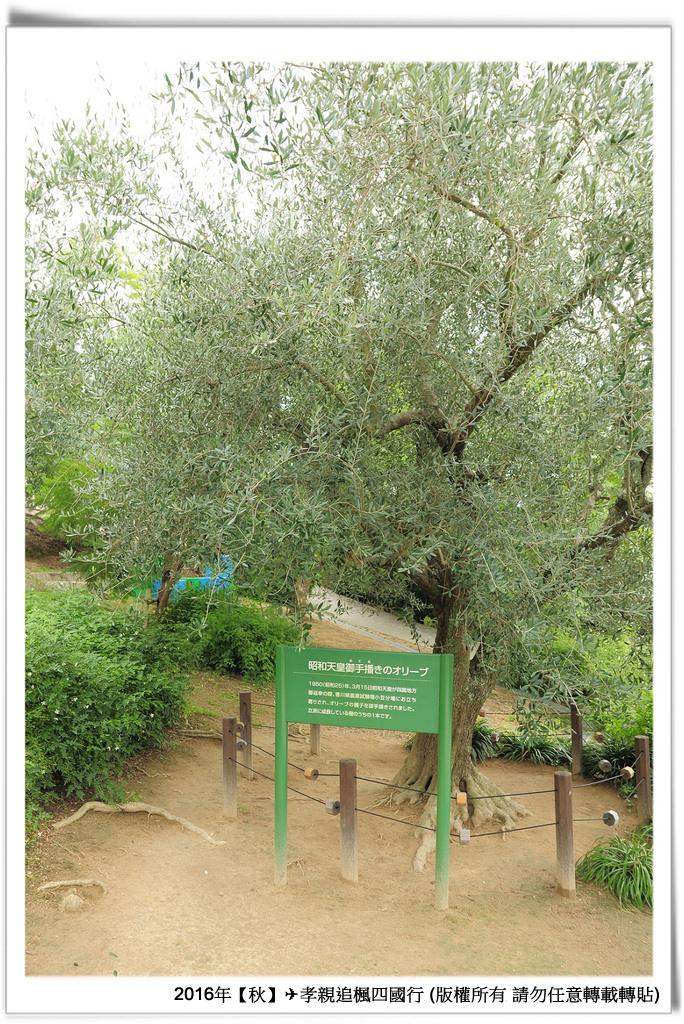 橄欖公園-003
